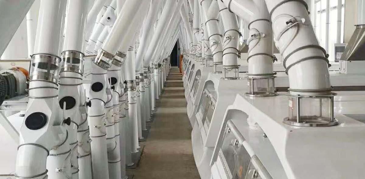 چین 350TPD کارخانه فرز گندم